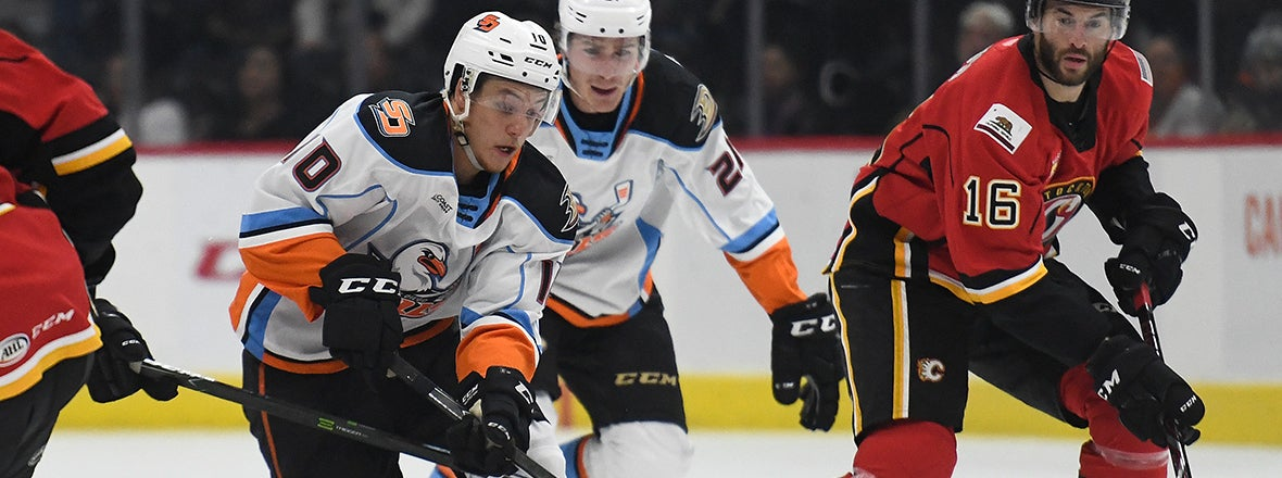 PREVIEW: Gulls at Heat