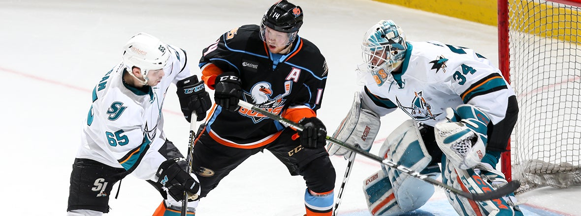 PREVIEW: Gulls at Barracuda